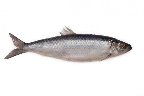 Рыба Сельдь олюторская с/с,вес/СП