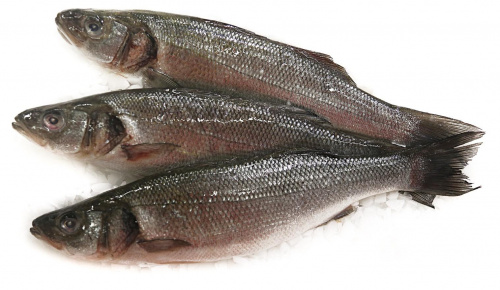 Рыба Сибас дефрост., вес/СП