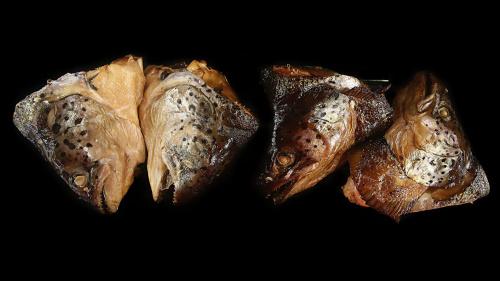 Рыба Сёмга г/к головы, вес/СП